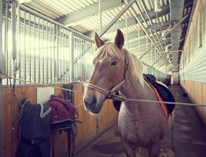 """конно-спортивный клуб """"Белая лошадь"""" село Кадниково."""