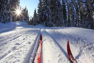 Оленьи Ручьи Сказка в зимнем лесу! Пеший или лыжный маршруты на выбор